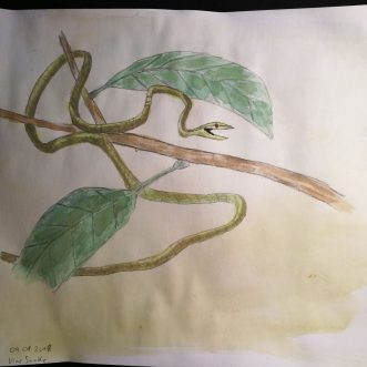 "Drawing: ""Vine Snake"" – Lineart – colored"