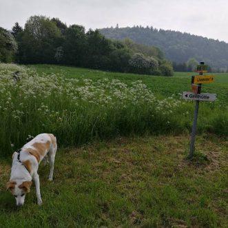 #Morningwalk with #Tayson – #Eifel #Gönnersdorf #Lissendorf – 19.05.2018