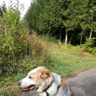 #Morningwalk with #Tayson – #Eifel #Gönnersdorf #Lissendorf – 26.08.2018