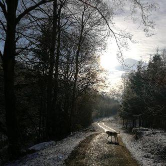 #Morningwalk with #Tayson – #Eifel #Gönnersdorf #Lissendorf – 19.01.2019