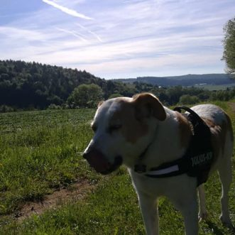 #Morningwalk with #Tayson – #Eifel #Gönnersdorf #Lissendorf – 01.06.2019