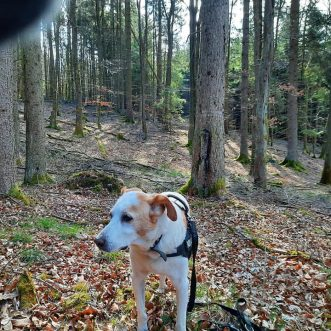 #Morningwalk with #Tayson – #Eifel #Gönnersdorf #Lissendorf – 03.04.2020