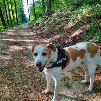 #Morningwalk with #Tayson – #Eifel #Gönnersdorf #Lissendorf – 21.05.2020